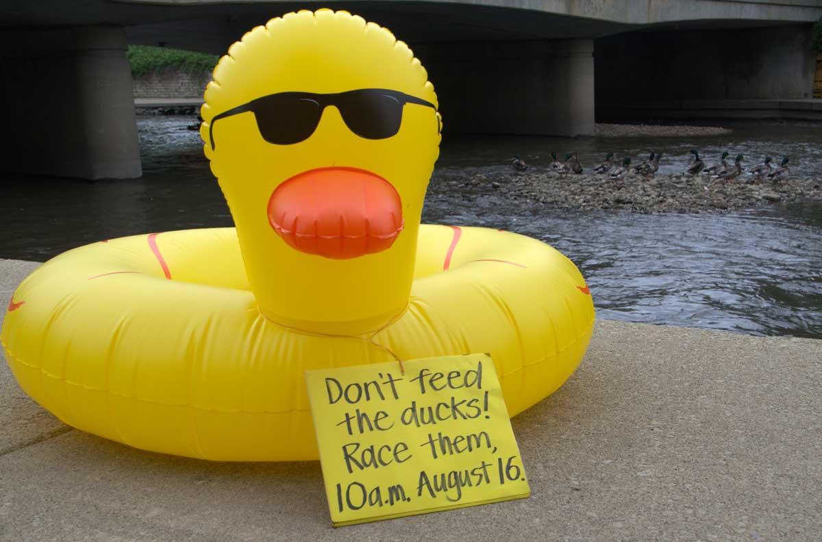 duck-with-ducks - Copy